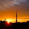 スカイツリーと夕陽7