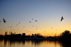 夕焼けと公園の風景8