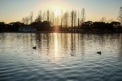 夕焼けと公園の風景11