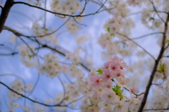 春が来た。18