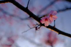 春が来た。15