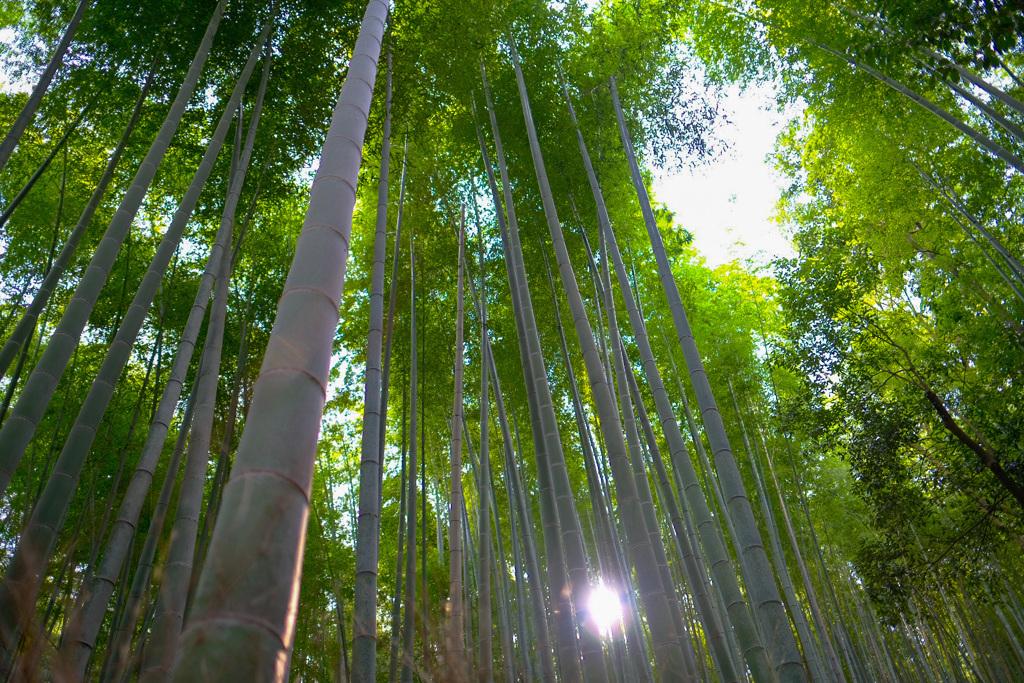 京都嵐山2