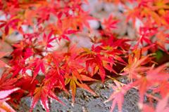 鎌倉より〜秋の風景-8