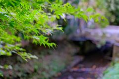 鎌倉より〜秋の風景-1
