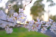 春が来た。17