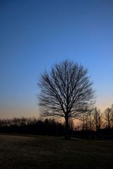 夕焼けと公園の風景10