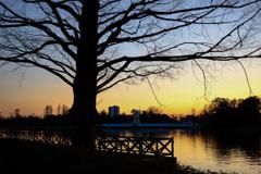 夕焼けと公園の風景9