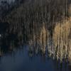 煌く水没林