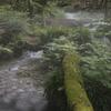 川霧を纏った湧水