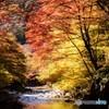 渓谷の紅葉(縦バージョン)