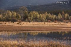 贅沢な湿原