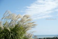 海風も秋色