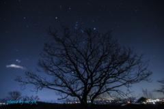 冬空の三つ星