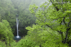 斑若葉の滝