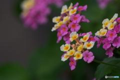 路傍の花    21―⑥