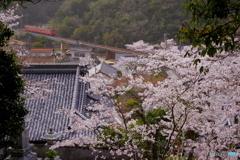 津山線の春