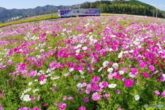 秋桜 × フッシュアイ