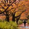 桜回廊 立冬