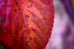 これも秋色