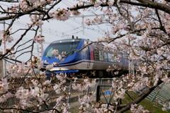 桜の額縁 その2