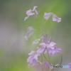 路傍の花 21-①