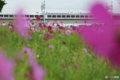新幹線 秋風景