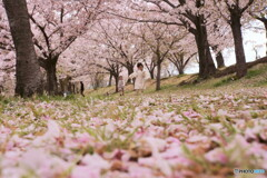 桜回廊でかけっこ