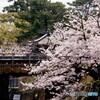 桜夙川 鉄道風景 その1