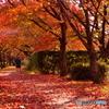 桜回廊の晩秋