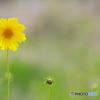 路傍の花 21-➁