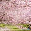 2020桜初撮り