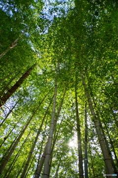 竹を見上げる