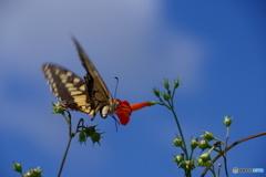 路傍の花と蝶