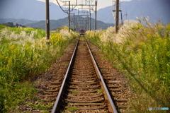 ススキの鉄路(再投稿)