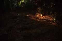 山道の木漏れ陽➁