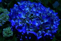 河原の風景「紫陽花」