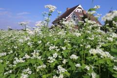 白い花と煙突のある家