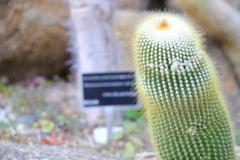 筑波実験植物園②