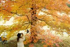 DSC00599 (3)フウの木
