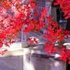 諸戸庭園 日本の風景 紅葉