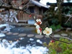 山寺に咲く