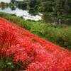 「赤い土手」