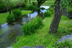 ハリヨの住む川