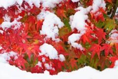 いきなり冬
