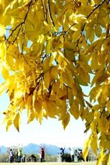 秋の日のトレーニング