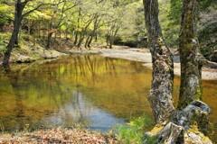 シャクナゲ池