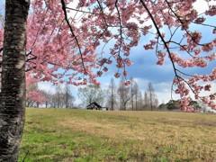 河津桜で春のオープン