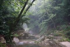 霧雨の渓谷
