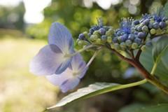 ツブツブが花