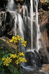 ツワブキの滝